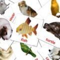 domestic-animals-english-flashcards
